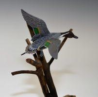 Div-C-Amtr-BOS-1st-Michael-Aguzin-NewIberiaLA-FlyingPintail