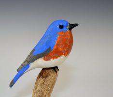 Div-M-DP-BOS-2nd-Skylar-Guge-PingreeIl-EasternBluebird